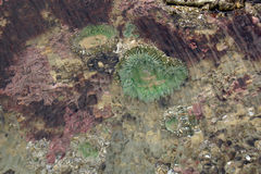 Abstract patterns formed by breeze rippling a tide pool Stock Photo