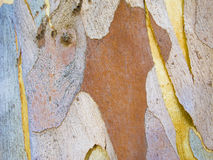 Abstract patterns on tree bark. Eucalyptus tree bark creates abstract patterns royalty free stock photography