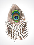 Abstract peacock feather. Vector illustration Royalty Free Stock Images