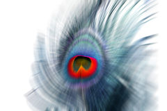 Abstract Peacock Layout Royalty Free Stock Image