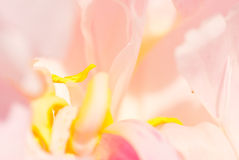Abstract peony Stock Image
