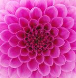 Abstract petals Royalty Free Stock Image