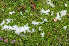 Abstract phot from the fallen first snow on the ground. Stock Image