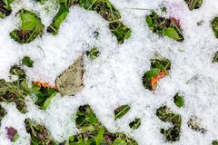 Abstract phot from the fallen first snow on the ground. Stock Photo