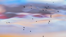 Abstract photo of birds against water surface Stock Images