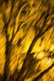 Abstract photo of a blurred, shiny tree branches and twigs Royalty Free Stock Images