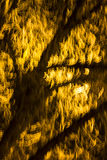 Abstract photo of a blurred, shiny tree branches and twigs Royalty Free Stock Photos
