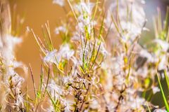 Abstract photo of dry grass and fluff royalty free stock photography