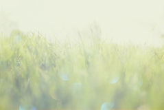 Abstract photo of light burst among grass and glitter bokeh lights. image is blurred and filtered . Abstract photo of light burst among grass and glitter bokeh royalty free stock photography
