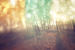 Abstract photo of light burst among trees and glitter bokeh lights. filtered image and textured Stock Image