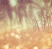 Abstract photo of light burst among trees and glitter bokeh lights. filtered image and textured. Stock Photos