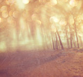 Abstract photo of light burst among trees and glitter bokeh lights. filtered image and textured Royalty Free Stock Photos