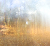 Abstract photo of light burst among trees and glitter bokeh lights. image is blurred and filtered. Stock Photos