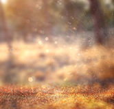 Abstract photo of light burst among trees and glitter bokeh lights. image is blurred and filtered Stock Photography