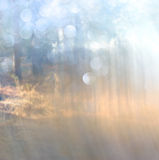 Abstract photo of light burst among trees and glitter bokeh lights. image is blurred and filtered. Royalty Free Stock Images