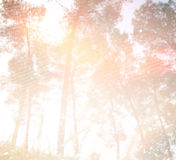 Abstract photo of light burst among trees and glitter bokeh lights. image is blurred and filtered . Stock Photography