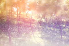 Abstract photo of light burst among trees and glitter bokeh lights. image is blurred and filtered . Royalty Free Stock Image