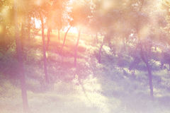 Abstract photo of light burst among trees and glitter bokeh lights. image is blurred and filtered . Royalty Free Stock Photography