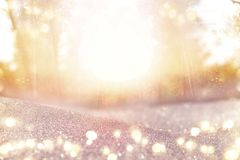 abstract photo of light burst among trees and glitter bokeh lights. image is blurred and filtered Stock Image