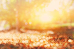 abstract photo of light burst among trees and glitter bokeh lights. image is blurred and filtered Stock Photos