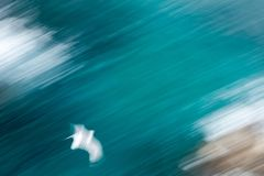 Abstract photo from a seagull from above, long exposure royalty free stock images