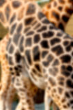 Abstract photo showing a giraffe skin for a background Stock Photo