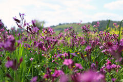 Abstract photo of spring meadow with wildflowers Stock Photos