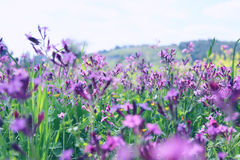 abstract photo of spring meadow with wildflowers Stock Photo