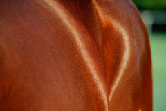 An abstract photo of the Thoroughbred racing horse Stock Photography