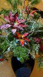 Abstract Christmas Poinsettia arrangement in Vase Stock Images