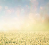 Abstract photo of wheat field and bright bokeh lights. Stock Photos