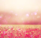 Abstract photo of wild flower field and bright bokeh lights Stock Photos