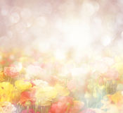 Abstract photo of wild flower field and bright bokeh lights Royalty Free Stock Image