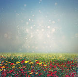 Abstract photo of wild flower field and bright bokeh lights. Royalty Free Stock Photos