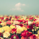 Abstract photo of wild flower field and bright bokeh lights. Stock Photography