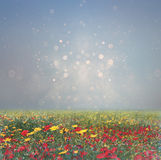 Abstract photo of wild flower field and bright bokeh lights. cross proccess effect Royalty Free Stock Images