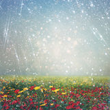 Abstract photo of wild flower field and bright bokeh lights. cross proccess effect Stock Photography