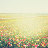 Abstract photo of wild flower field and bright bokeh lights. cross proccess effect.  Royalty Free Stock Photography