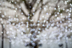 Abstract photo of winter tree and glitter bokeh lights. Holiday and seasonal background royalty free stock images