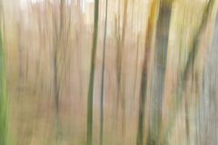 Abstract photography of woodland trees in Gorbea, Spain. Abstract photography, with intentional camera movement, of woodland trees in Gorbea, Basque Country royalty free stock photo