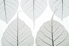 Abstract picture with autumn leaves. Abstract picture with five autumn leaves Stock Images