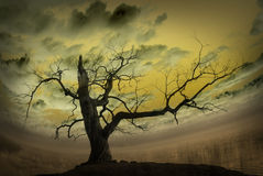 Abstract picture with bare tree Stock Image