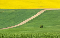 Abstract picture with colored fields Stock Images