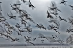 Abstract picture from a gruop seabirds on the air Stock Photo