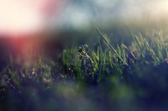 Abstract picture of the spring grass Stock Photography