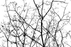 Abstract Pictures of Branches royalty free stock photo