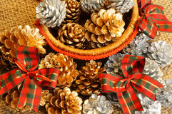Abstract pine cone, Xmas season Stock Image