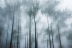 Abstract pine Royalty Free Stock Photo