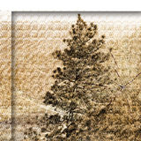 Abstract pine tree background with shadow depth Stock Photo
