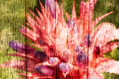 Abstract pineapple pink flowers Stock Photo